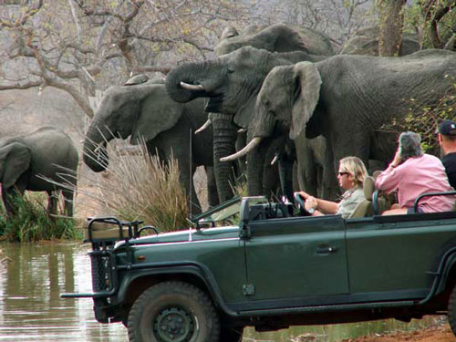 Elephant,Sightings,Game Drives,Mohlabetsi Safari Lodge,Balule Nature Reserve,Kruger Park