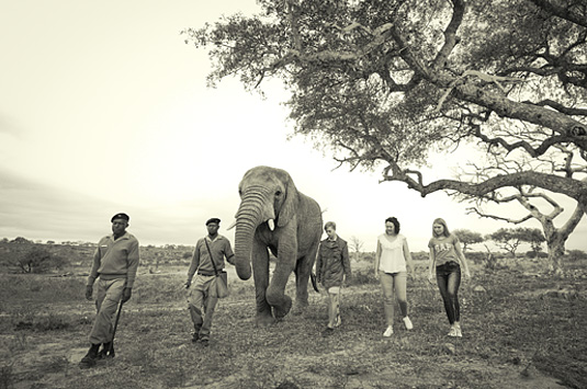 Daily Elephant Interaction Camp Jabulani Greater Kruger South Africa