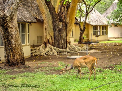 Letaba Rest Camp Bungalows Bush Buck Kruger National Park South Africa Big Five Safari