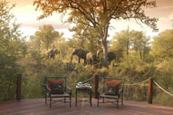 Elephants from the Private deck